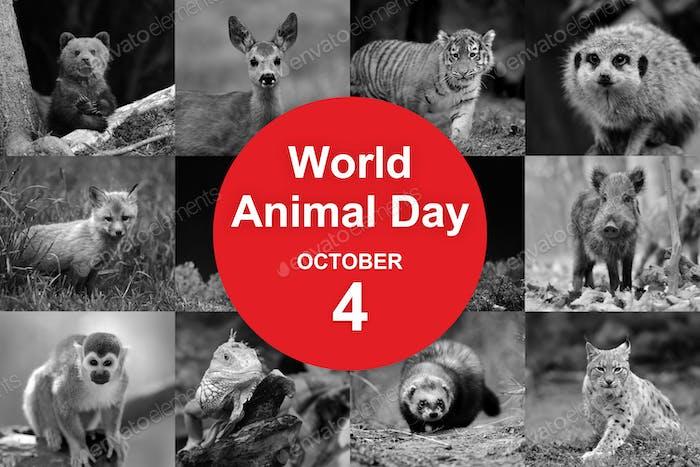 Welt-Tiertag
