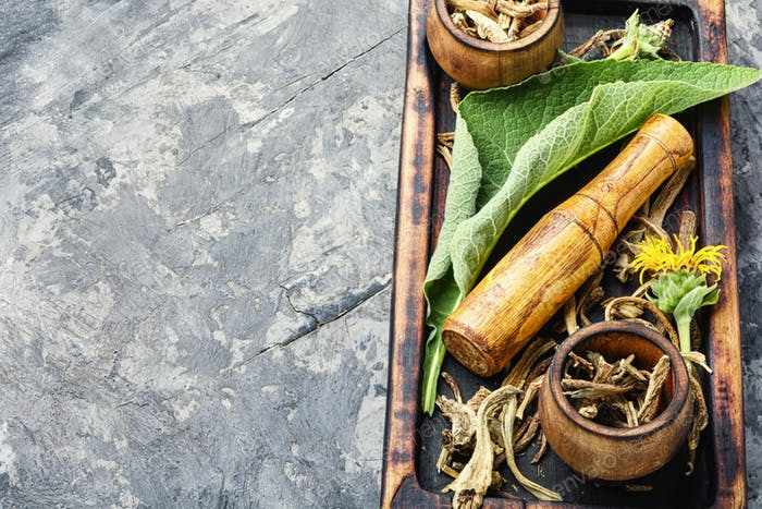 Heilpflanze Inula