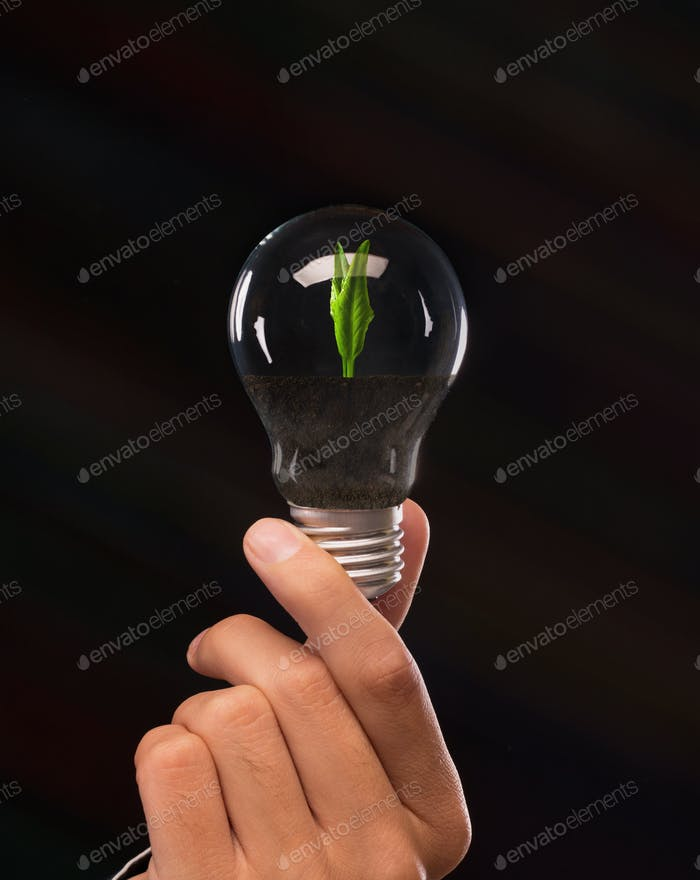 Man holding light bulb with growing plant