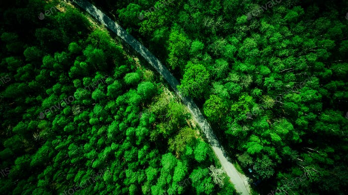 Green pine forest and rural road. Aerial drone view from above