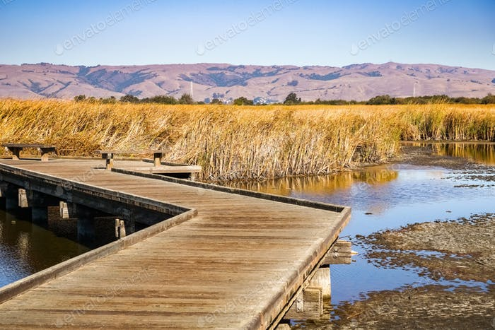 Boardwalk going through wetlands