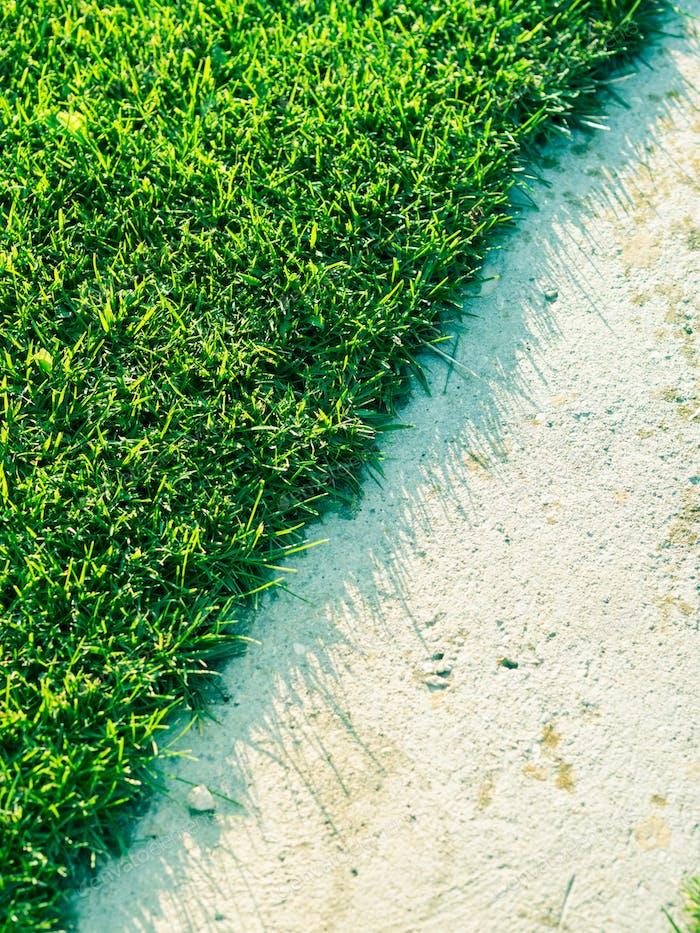 Green grass textured background. Daylight