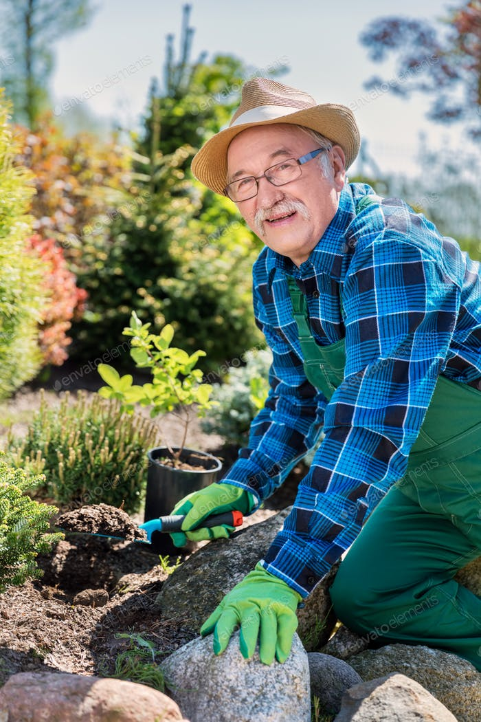 Senior gardener digging in a garden.