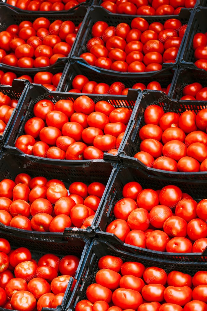 Fresh ripe red tomatoes are in the boxes on farmers market