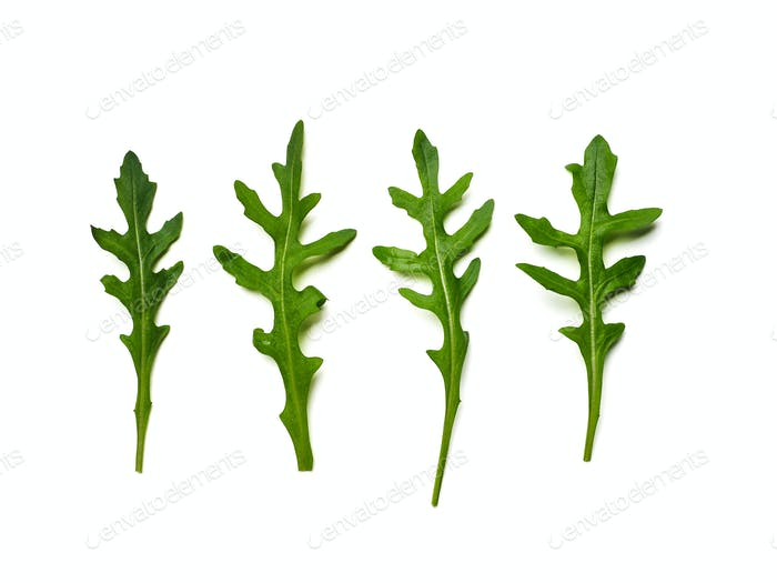 Thumbnail for Four arugula leaves isolated on white