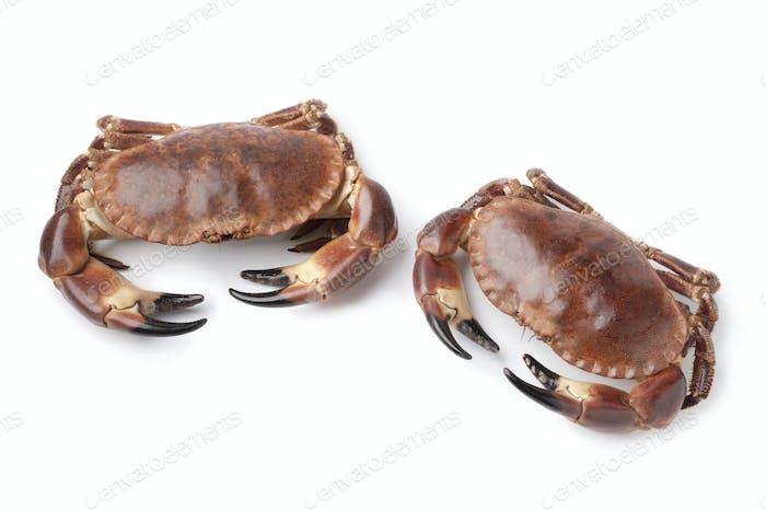 Pair of fresh raw edible sea crabs