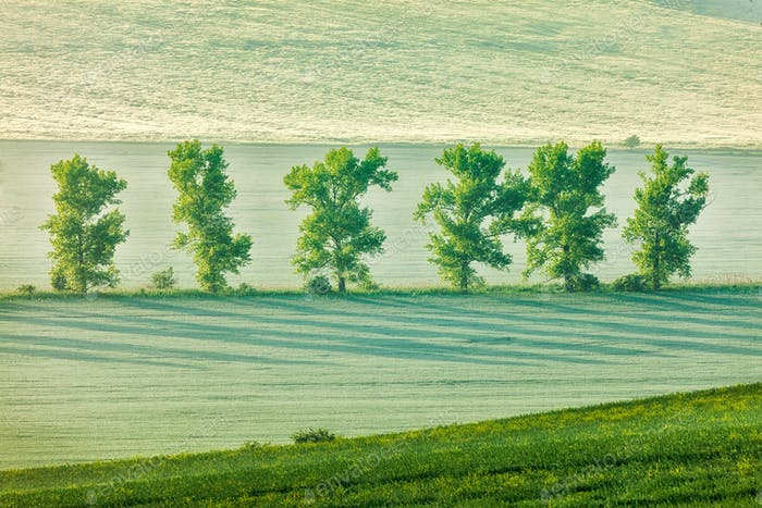 Mährische hügelige Landschaft mit Bäumen am frühen Morgen