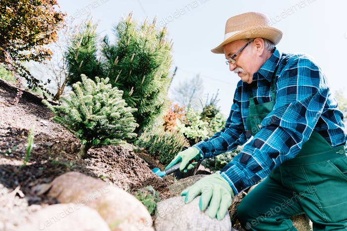 Senior man planting plants in a garden.