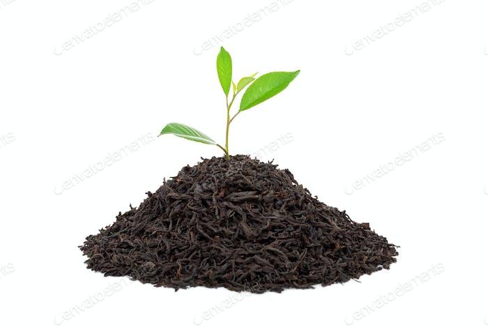 Black tea with leafs