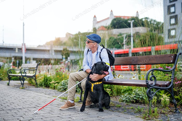 Senior blind man with guide dog sitting on bench in park in city