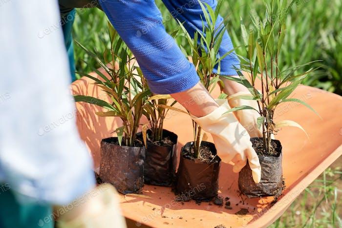 Gardeners transplants plants