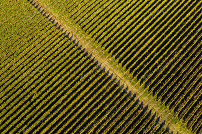 Aerial view of vineyard in late afternoon lights