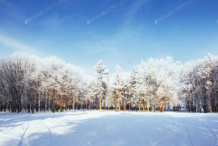 Trees in cold winter day and snow