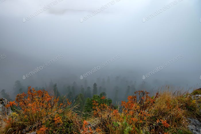 Autumn landscape with mountain forest