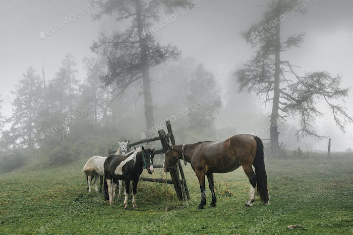horses on a leash in a meadow