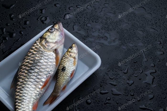 fish in plastic tray