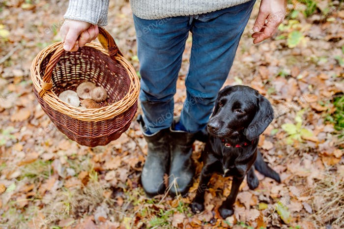 Unrecognizable man with dog holding basket with mushooms, forest