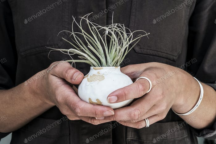 Close up of woman holding air plant in terracotta pots.