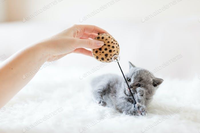 Котенок играет с игрушкой.