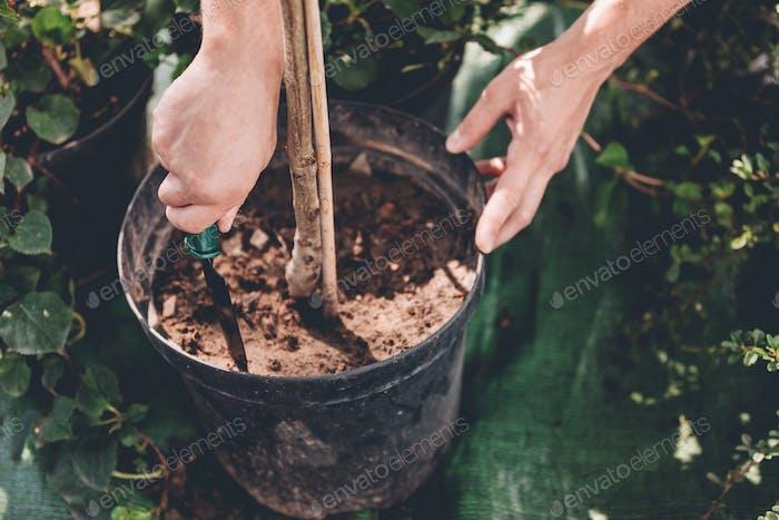 Teilansicht des Gärtners mit Handkelle Pflanzung einer Pflanze in Metalleimer