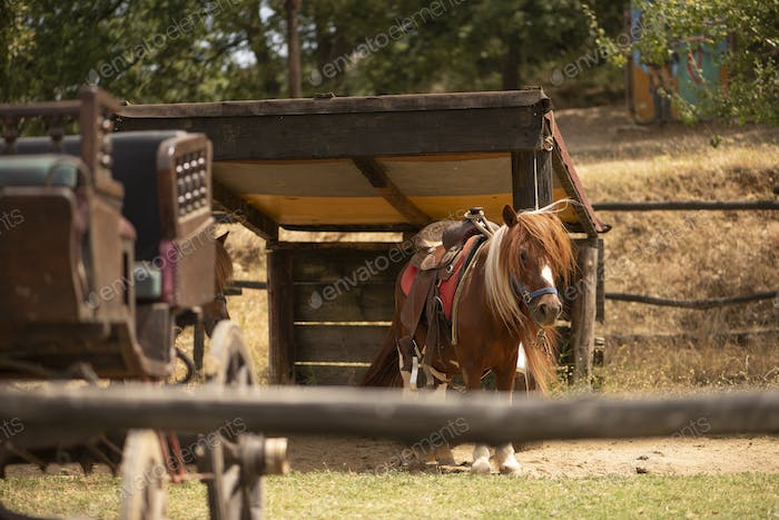 Old Wild West Horse Carriage and a Beautiful Pony in a Farm