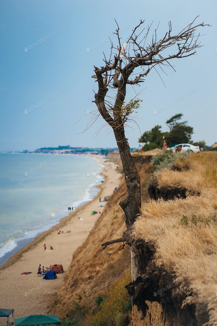 tree on a cliff above the ocean