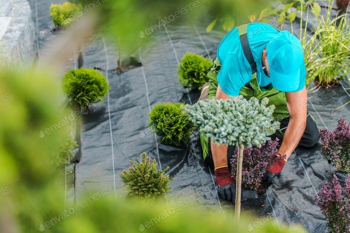 Gardener Building New Garden