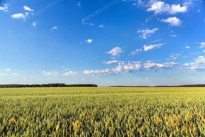 Countryside landscape on sunny day
