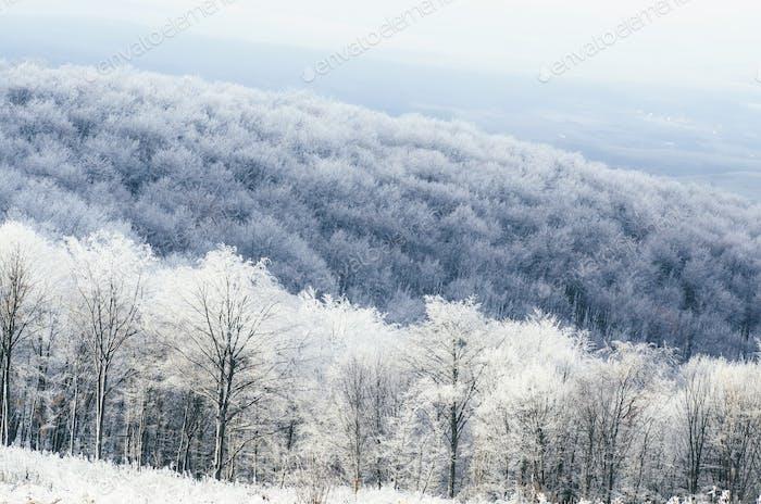 view above frozen forest in winter fantasy landscape