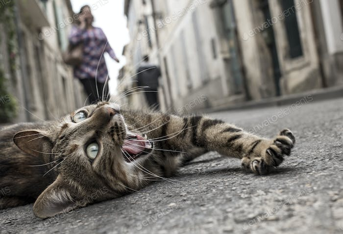 homeless cat on the ground down the street