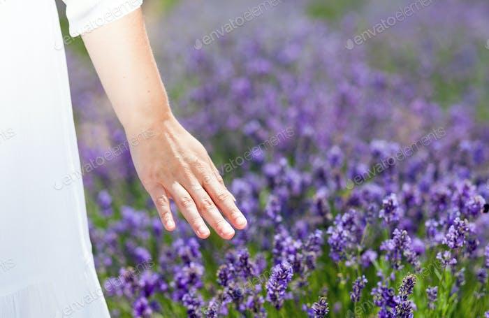 Mujer tocando la mano arbustos de lavanda en el día de verano