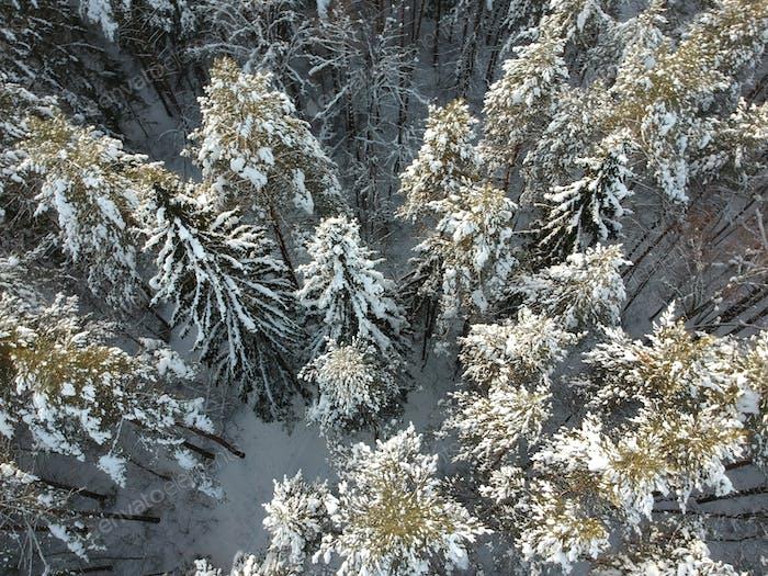 Winterwald an einem kalten sonnigen Tag
