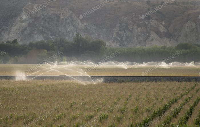 Watering systems and corn