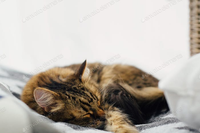 Симпатичный табби кот спит на удобной кровати