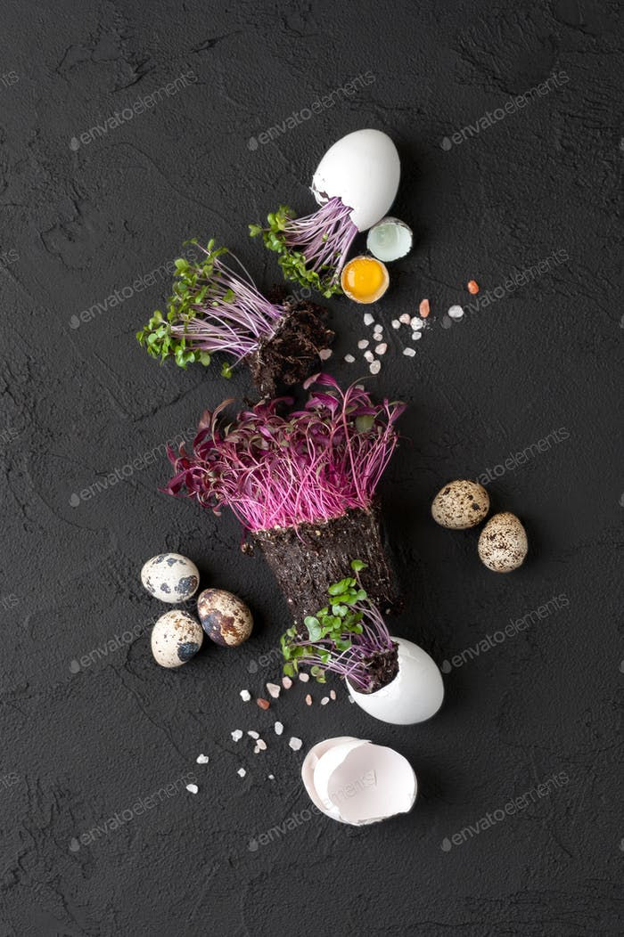 Fresh chicken and quail eggs and watercress on a black backgroun