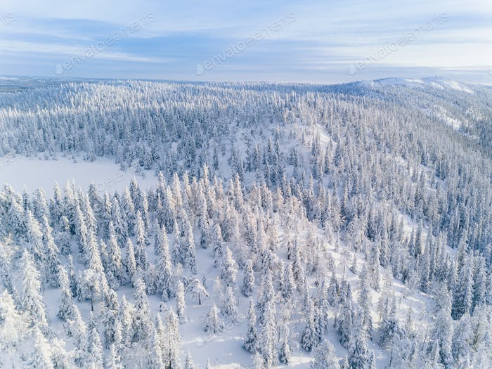 Aerial view of winter forest covered in snow in Finland, Lapland.