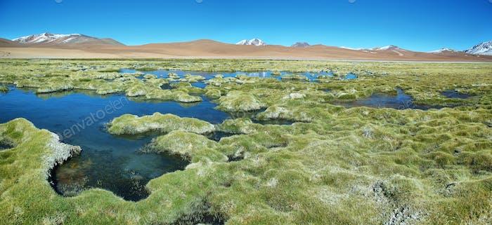 Quepiaco lagoon, Chile