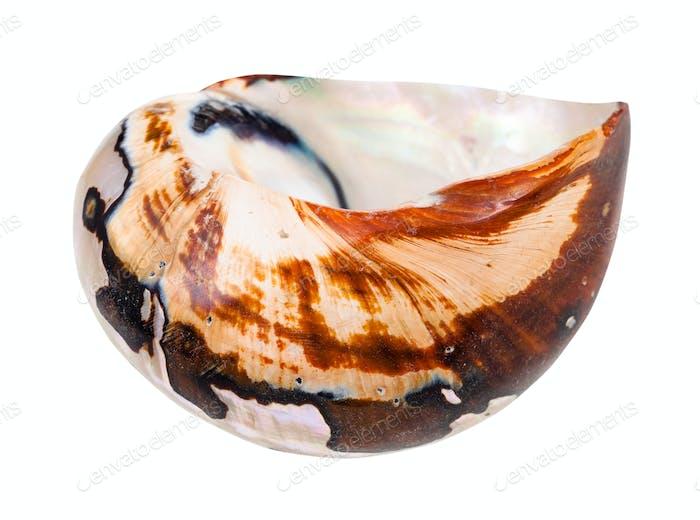 leere Schale von Nautilus Mollusc isoliert auf weiß