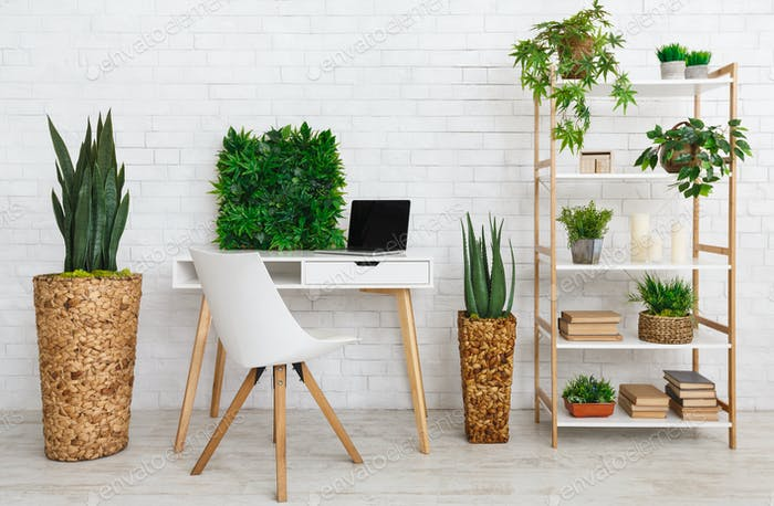 Workplace with various plants on the bookshelf