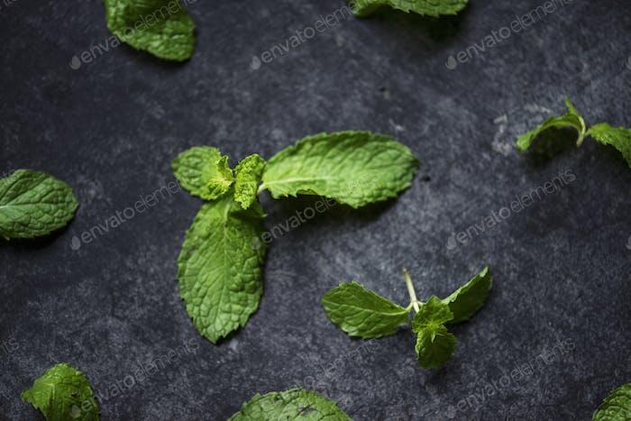 Closeup of fresh mint leaves on black background
