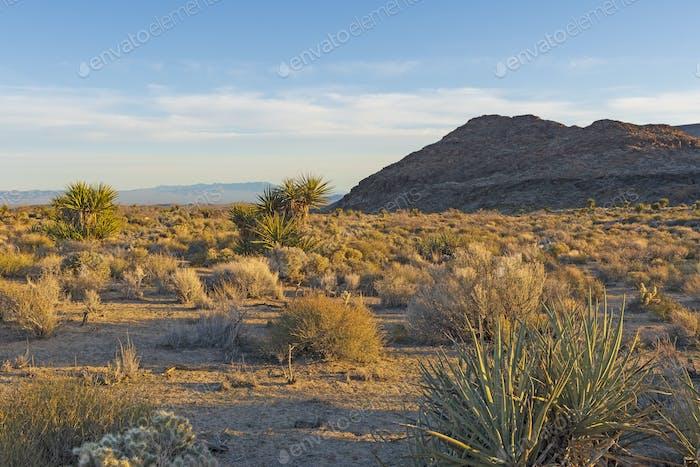 Luz de la tarde en el desierto