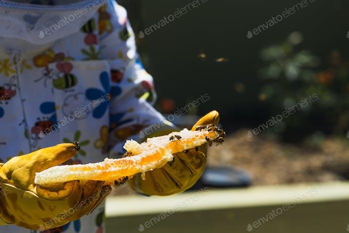 Beekeeper holding honey comb