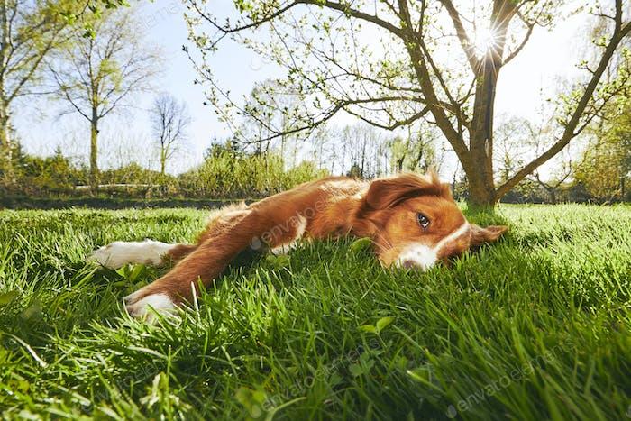 Dog resting on the garden