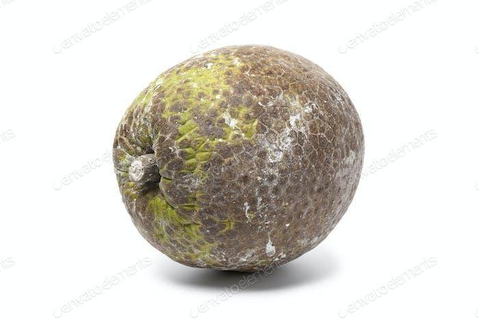 Whole single breadfruit
