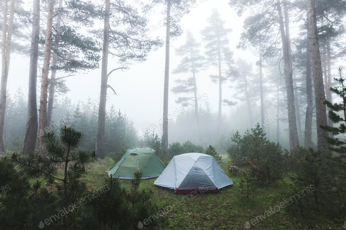 Two tent in foggy coniferous forest. Cold and wet misty weather in hike, overnight stay in camping