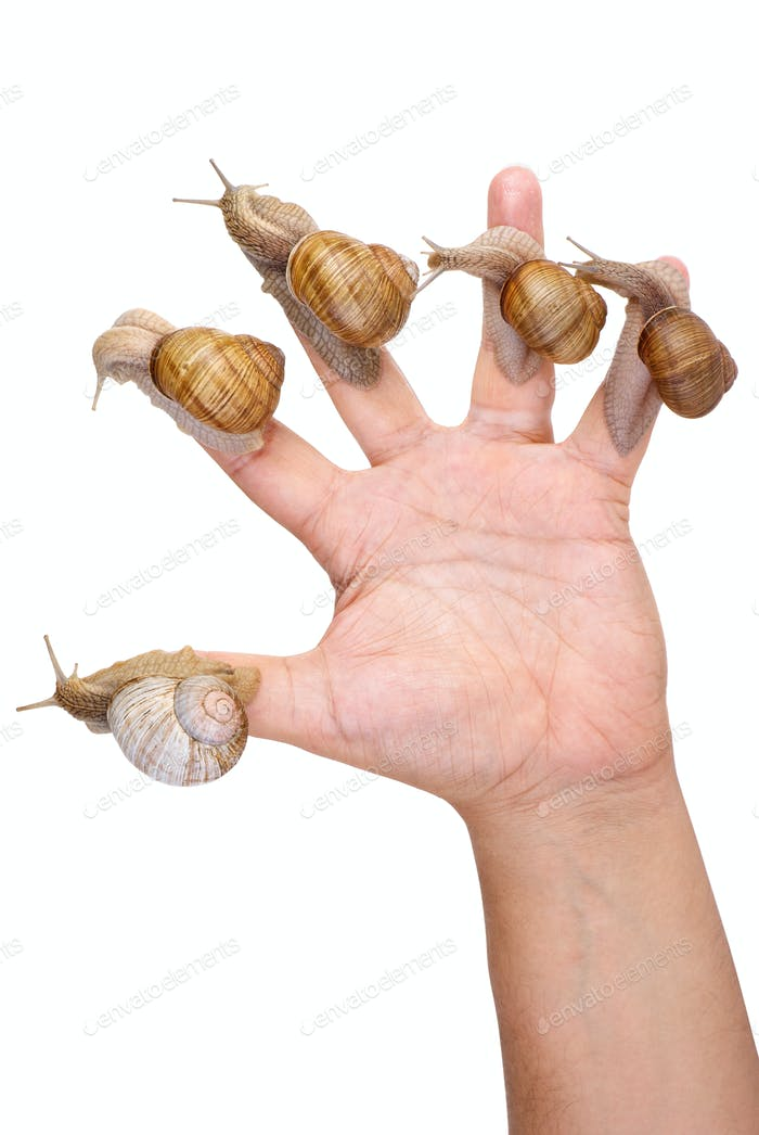 Garden Snails on the human hand