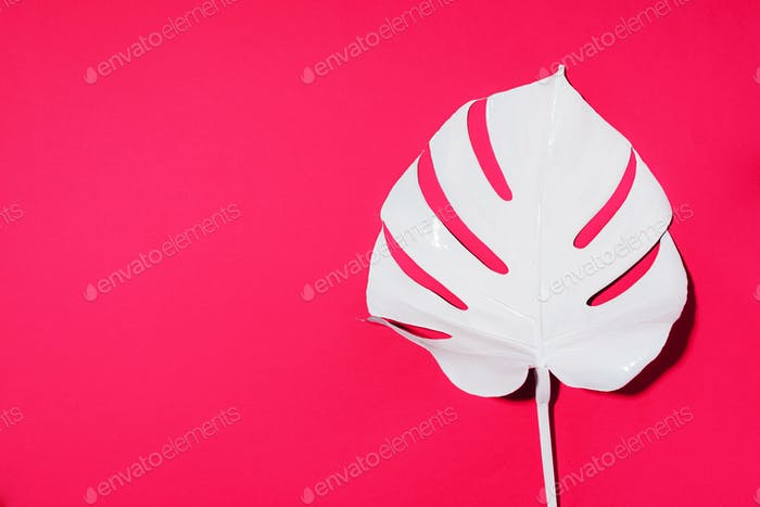 Summer composition. White tropical palm leaves on pink background. Summer concept. Flat lay, top