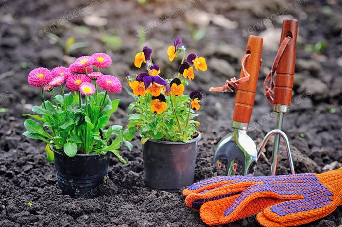 Gardening tools and spring flowers in the garden