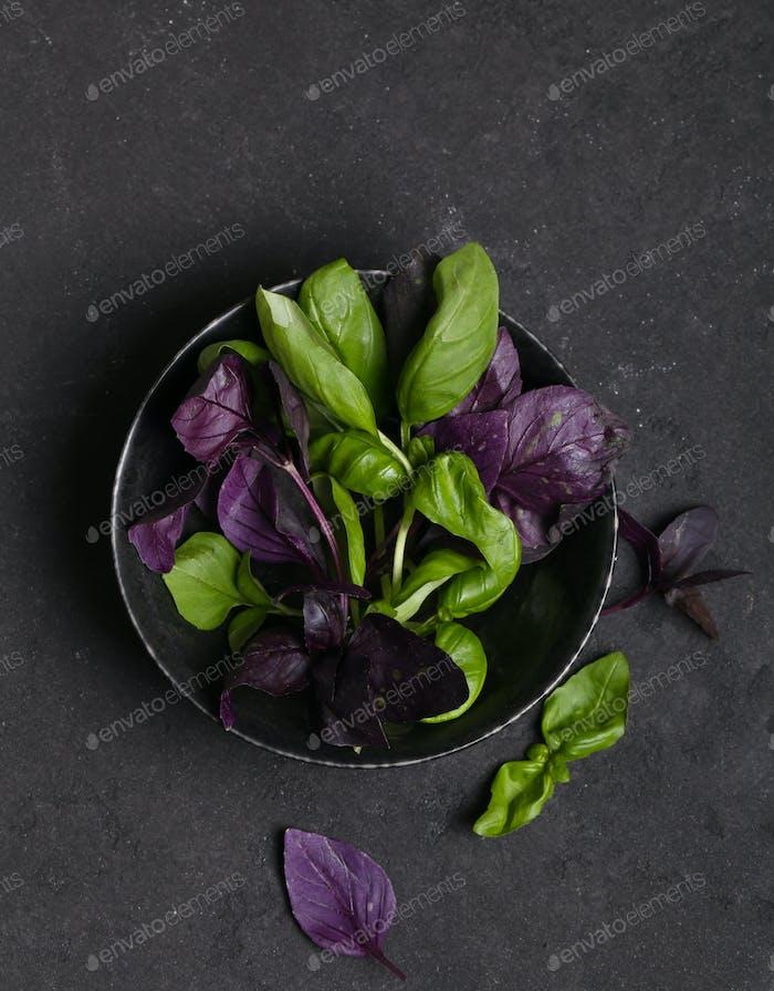 Fragrant Basil Herbs