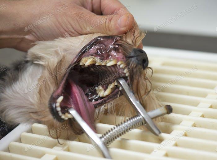 tartar removal for dog
